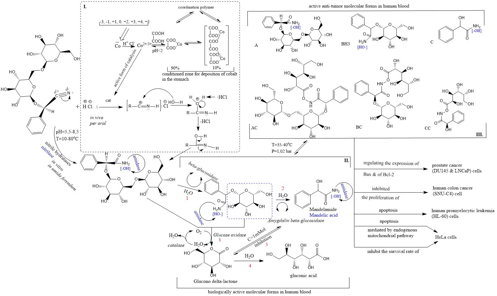 Theoretical Analysis for the Safe Form and Dosage of Amygdalin Product